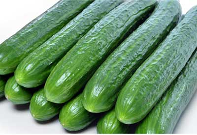 Wholesale Seedless Cucumber